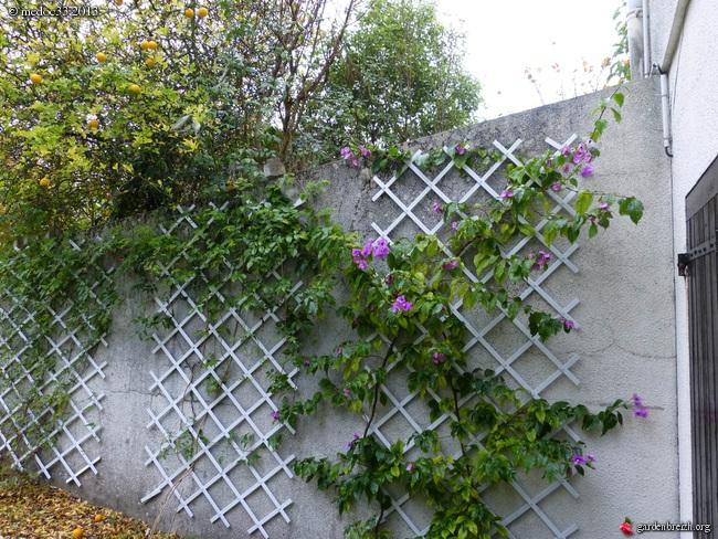 Mon jardin Médocain, quelques vues au fil du temps - Page 3 GBPIX_photo_602850