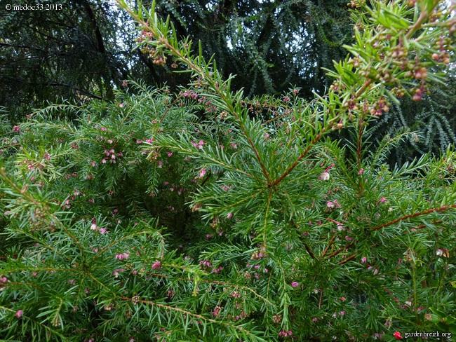 Mon jardin Médocain, quelques vues au fil du temps - Page 3 GBPIX_photo_602863