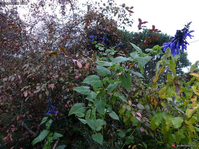 Mon jardin Médocain, quelques vues au fil du temps - Page 3 GBPIX_photo_603126