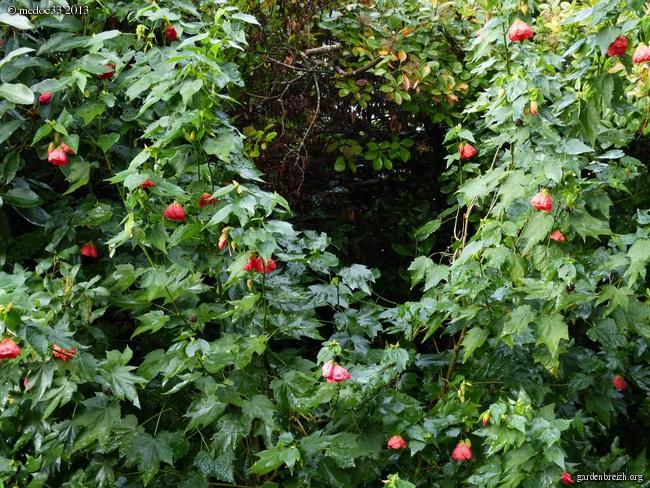 Mon jardin Médocain, quelques vues au fil du temps - Page 3 GBPIX_photo_603131