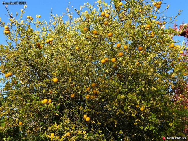 Mon jardin Médocain, quelques vues au fil du temps - Page 3 GBPIX_photo_603133