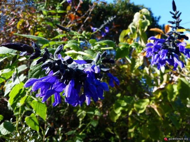 Mon jardin Médocain, quelques vues au fil du temps - Page 3 GBPIX_photo_603419