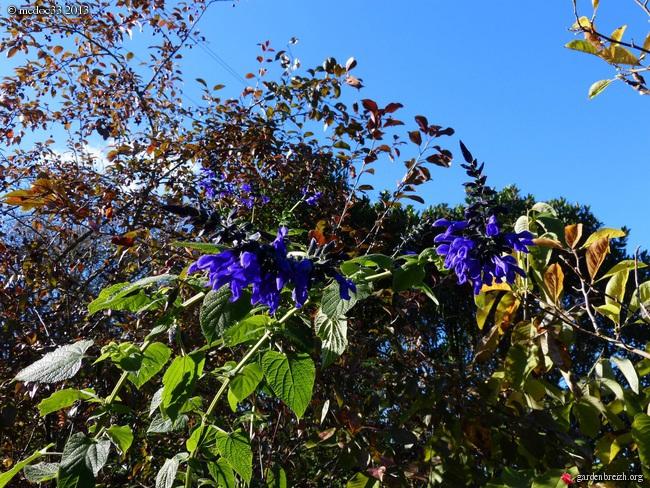 Mon jardin Médocain, quelques vues au fil du temps - Page 3 GBPIX_photo_603421
