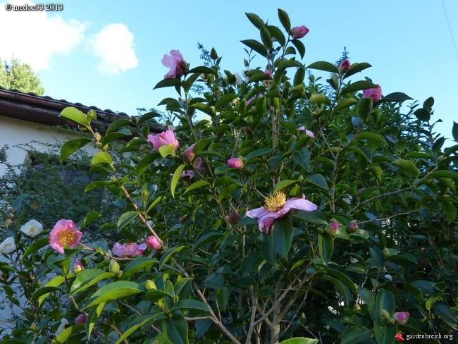 Mon jardin Médocain, quelques vues au fil du temps - Page 3 GBPIX_photo_603423