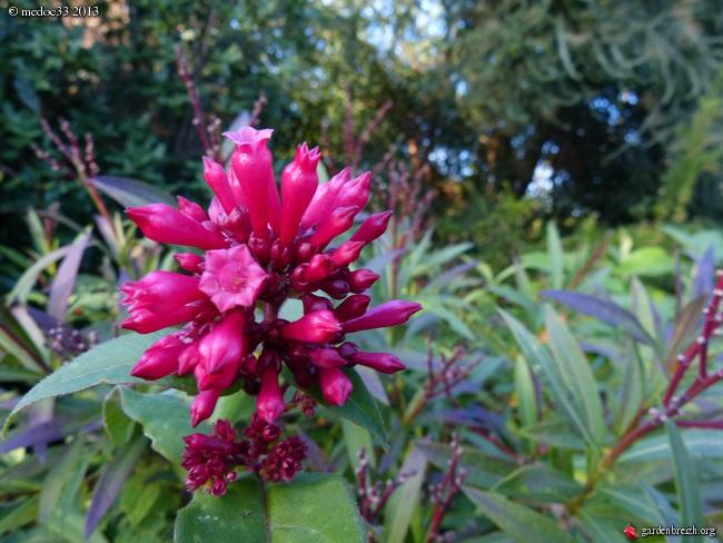 Mon jardin Médocain, quelques vues au fil du temps - Page 3 GBPIX_photo_603643