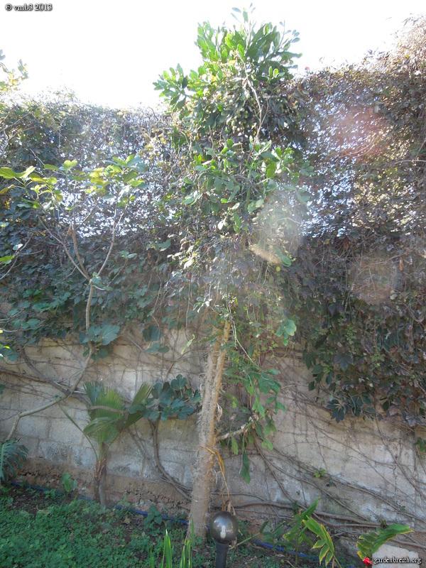 greffe de cactus GBPIX_photo_603815