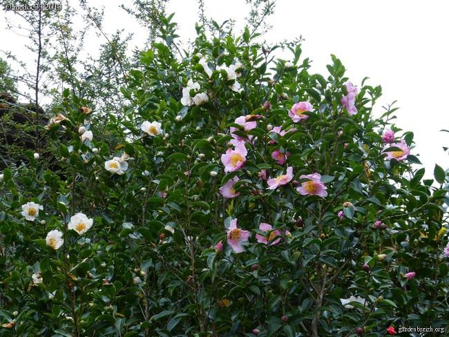 Mon jardin Médocain, quelques vues au fil du temps - Page 3 GBPIX_photo_603939
