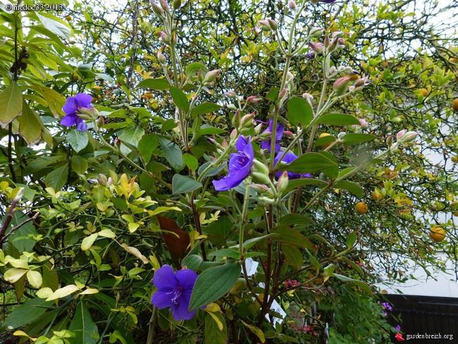 Mon jardin Médocain, quelques vues au fil du temps - Page 3 GBPIX_photo_603940