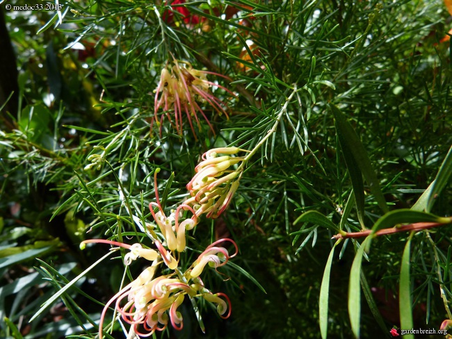 Mon jardin Médocain, quelques vues au fil du temps - Page 3 GBPIX_photo_603984