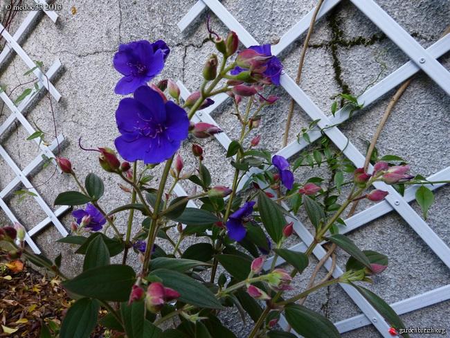 Mon jardin Médocain, quelques vues au fil du temps - Page 3 GBPIX_photo_603989