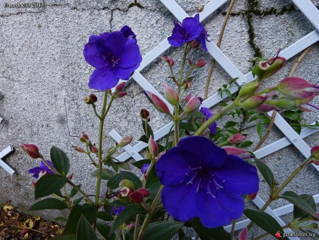 Mon jardin Médocain, quelques vues au fil du temps - Page 3 GBPIX_photo_603990
