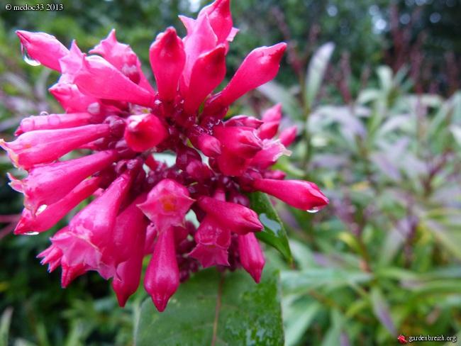 Mon jardin Médocain, quelques vues au fil du temps - Page 3 GBPIX_photo_604077