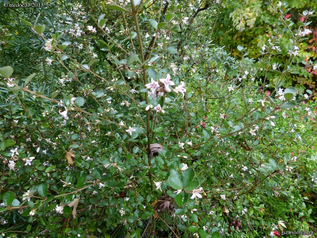 Mon jardin Médocain, quelques vues au fil du temps - Page 3 GBPIX_photo_604089