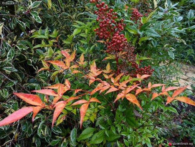 Mon jardin Médocain, quelques vues au fil du temps - Page 3 GBPIX_photo_604092
