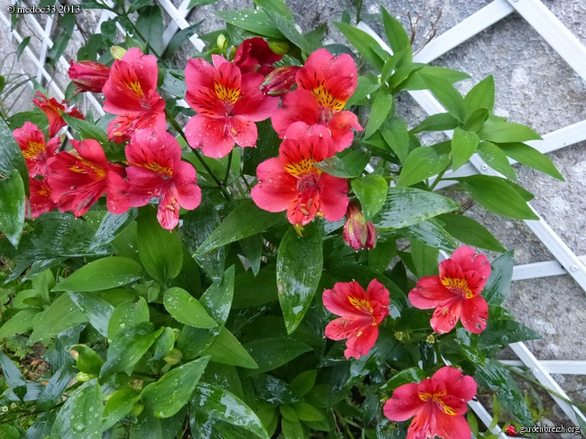 Mon jardin Médocain, quelques vues au fil du temps - Page 3 GBPIX_photo_604094
