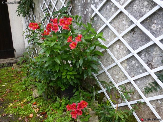 Mon jardin Médocain, quelques vues au fil du temps - Page 3 GBPIX_photo_604095