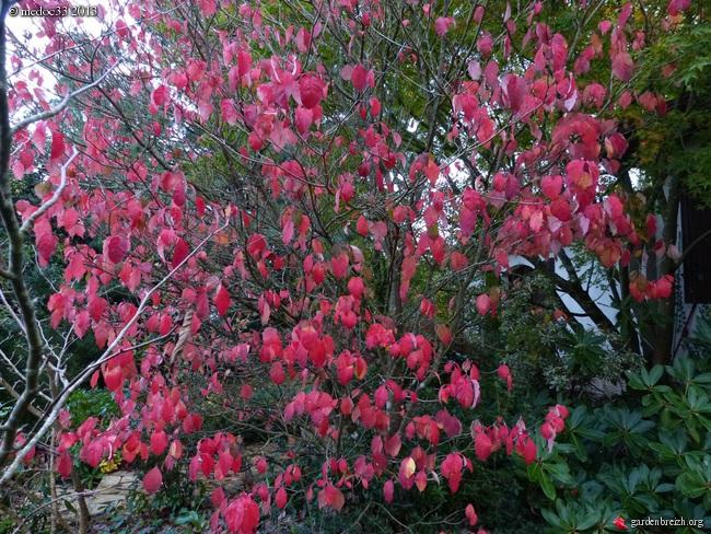 Mon jardin Médocain, quelques vues au fil du temps - Page 3 GBPIX_photo_604465