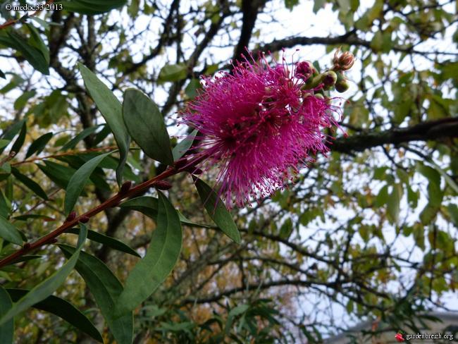 Mon jardin Médocain, quelques vues au fil du temps - Page 3 GBPIX_photo_604469