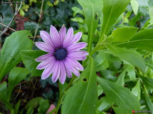Mon jardin Médocain, quelques vues au fil du temps - Page 3 GBPIX_photo_604471