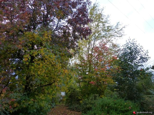 Mon jardin Médocain, quelques vues au fil du temps - Page 3 GBPIX_photo_604473