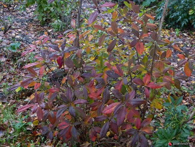 Mon jardin Médocain, quelques vues au fil du temps - Page 3 GBPIX_photo_604474