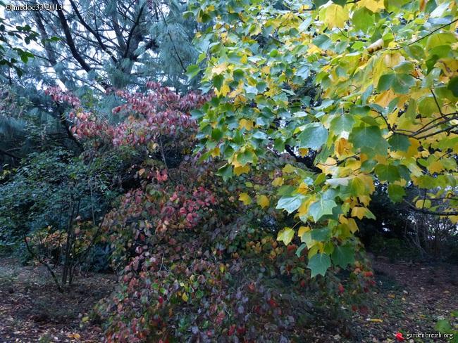 Mon jardin Médocain, quelques vues au fil du temps - Page 3 GBPIX_photo_604475
