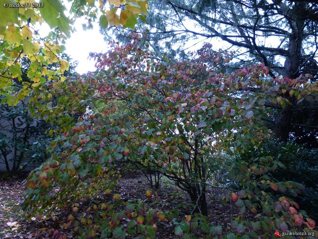 Mon jardin Médocain, quelques vues au fil du temps - Page 3 GBPIX_photo_604476