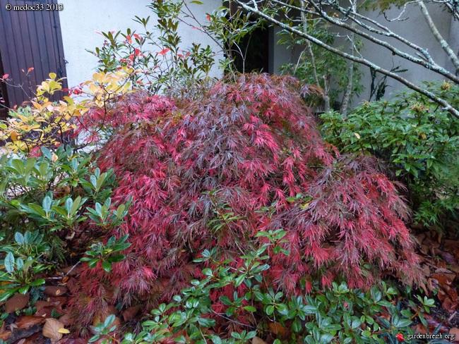 Mon jardin Médocain, quelques vues au fil du temps - Page 3 GBPIX_photo_604478