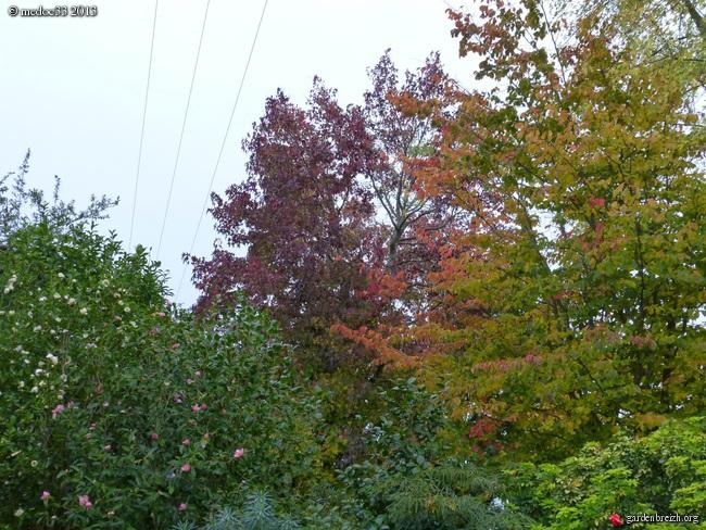 Mon jardin Médocain, quelques vues au fil du temps - Page 3 GBPIX_photo_604480