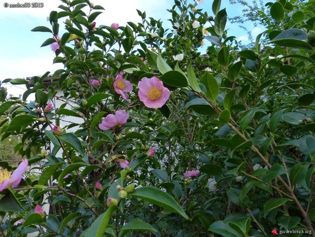 Mon jardin Médocain, quelques vues au fil du temps - Page 3 GBPIX_photo_604483