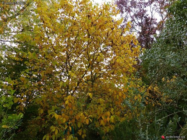 Mon jardin Médocain, quelques vues au fil du temps - Page 3 GBPIX_photo_604484
