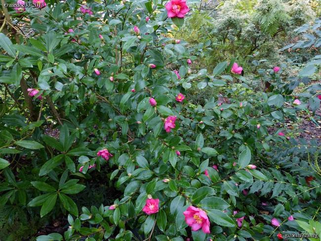 Mon jardin Médocain, quelques vues au fil du temps - Page 3 GBPIX_photo_604502