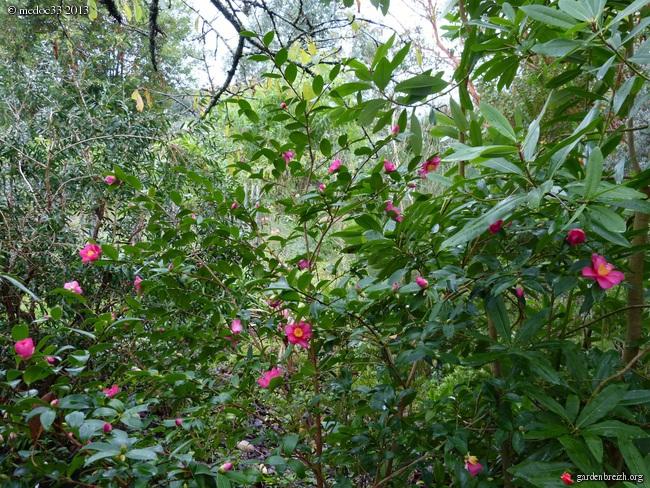 Mon jardin Médocain, quelques vues au fil du temps - Page 3 GBPIX_photo_604503
