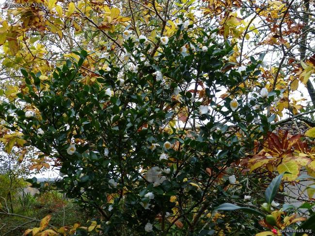 Mon jardin Médocain, quelques vues au fil du temps - Page 3 GBPIX_photo_604504