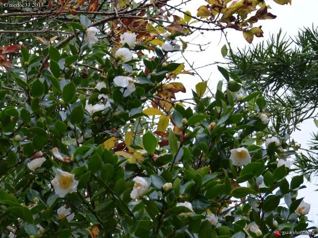Mon jardin Médocain, quelques vues au fil du temps - Page 3 GBPIX_photo_604505