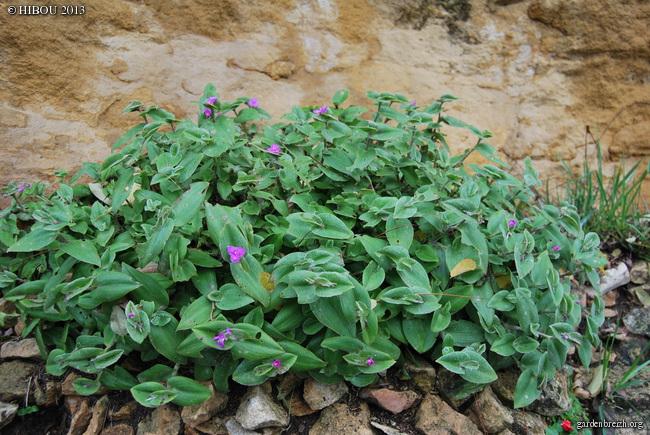 (24) Petit jardin exotique à la Roque-Gageac - Page 2 GBPIX_photo_605228