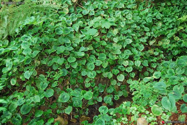 streptolirion - Streptolirion volubile - Page 3 GBPIX_photo_611846
