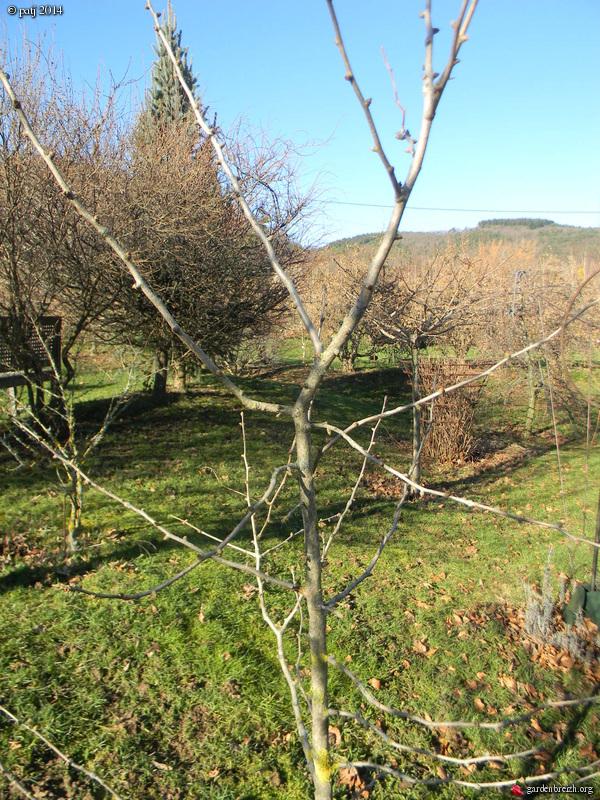 Ginkgo biloba - arbre aux quarante écus - Page 7 GBPIX_photo_615071