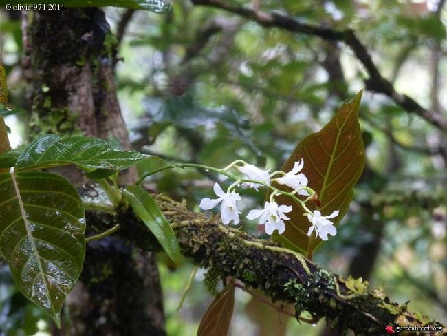 petite balade dominicale à la Réunion GBPIX_photo_619001