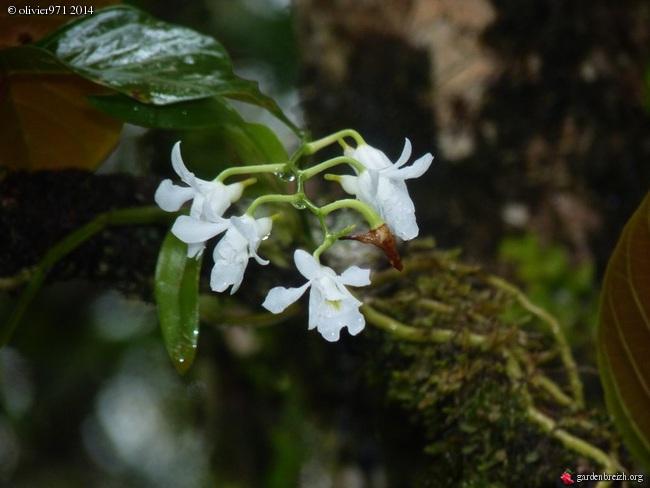 petite balade dominicale à la Réunion GBPIX_photo_619002