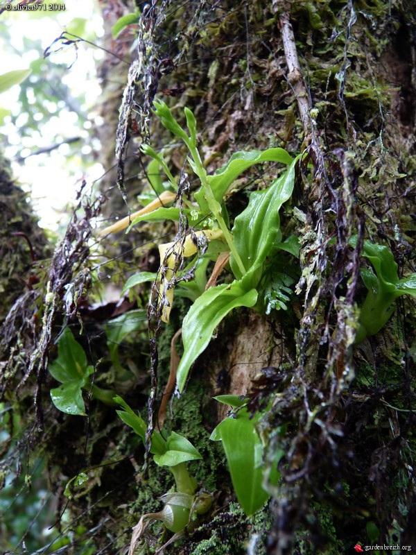 petite balade dominicale à la Réunion GBPIX_photo_619003