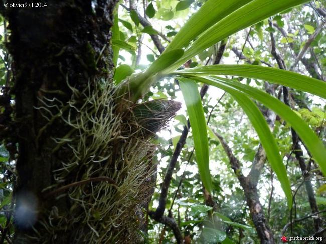 petite balade dominicale à la Réunion GBPIX_photo_619010