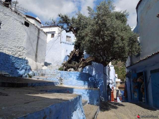 La culture et l'entretien de l'olivier- -Olea Europea - Page 3 GBPIX_photo_623915
