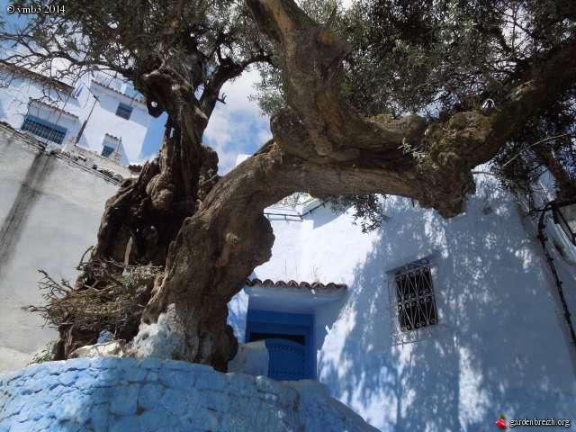 La culture et l'entretien de l'olivier- -Olea Europea - Page 3 GBPIX_photo_623918