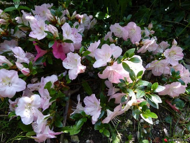j'ai descendu dans mon jardin GBPIX_photo_627446