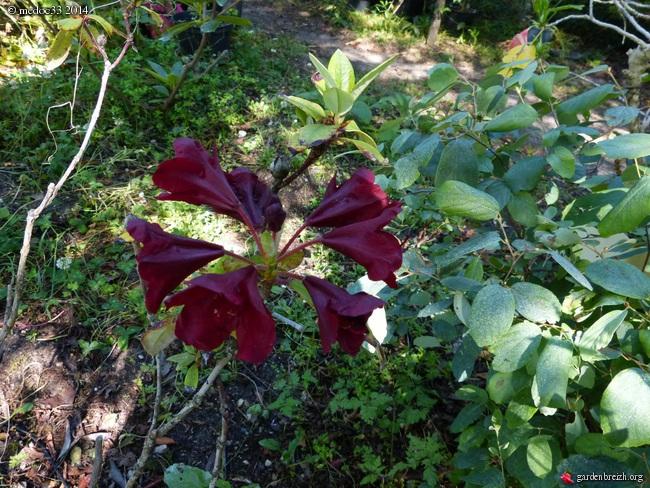 j'ai descendu dans mon jardin GBPIX_photo_628941