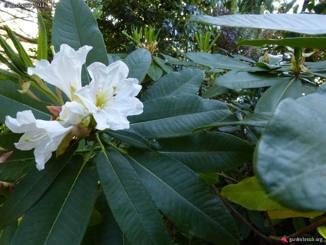 j'ai descendu dans mon jardin GBPIX_photo_630034