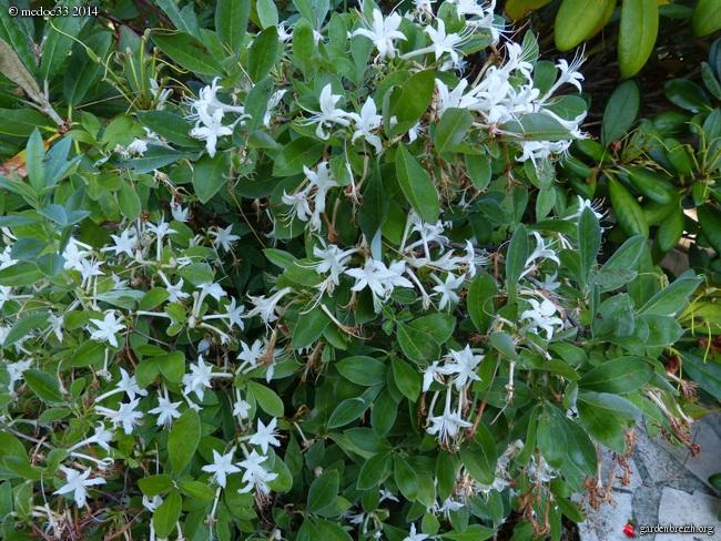 j'ai descendu dans mon jardin GBPIX_photo_630036