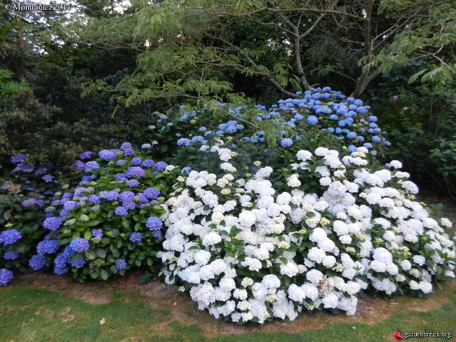 massifs en blanc - fleurs et feuillages : belles associations  GBPIX_photo_630667