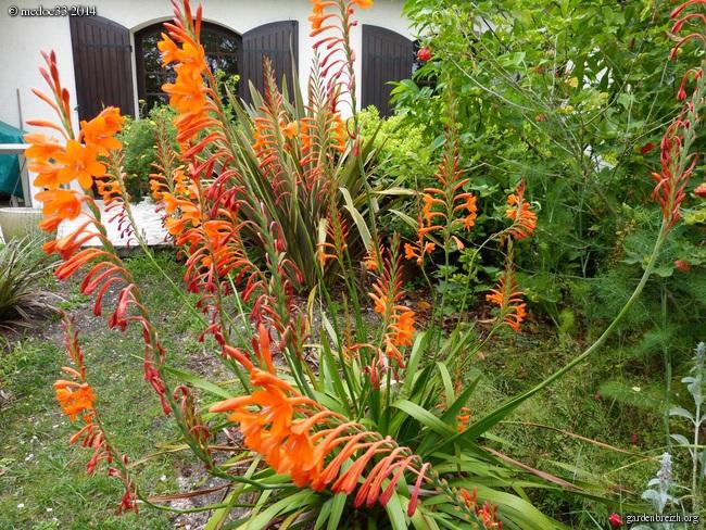 j'ai descendu dans mon jardin GBPIX_photo_630820